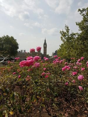 сад в центре Лондона
