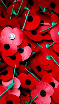 цветы мака как символ уважения к павшим воинам в UK