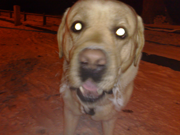 У собаки Тимати замёрзли усы
