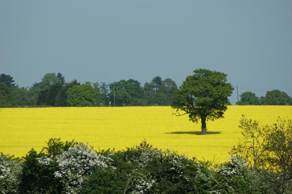 Британская природа, поле